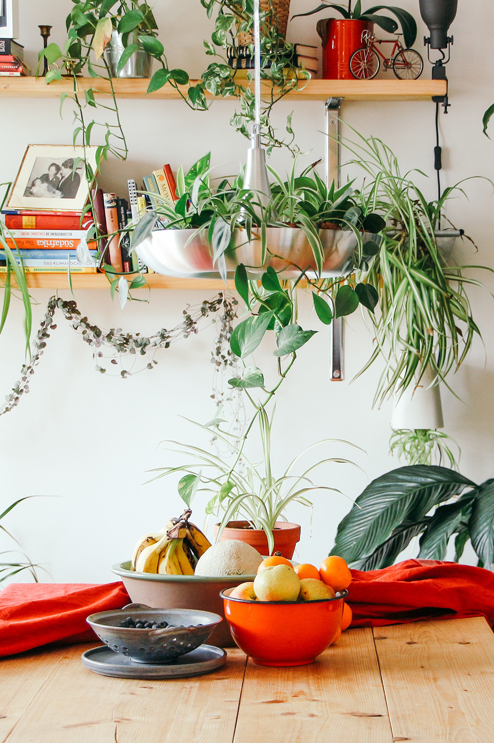 5 Best plants for your kitchen
